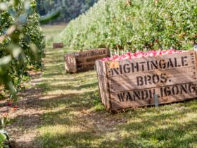 Nightingale Bros Orchard Apple Bins