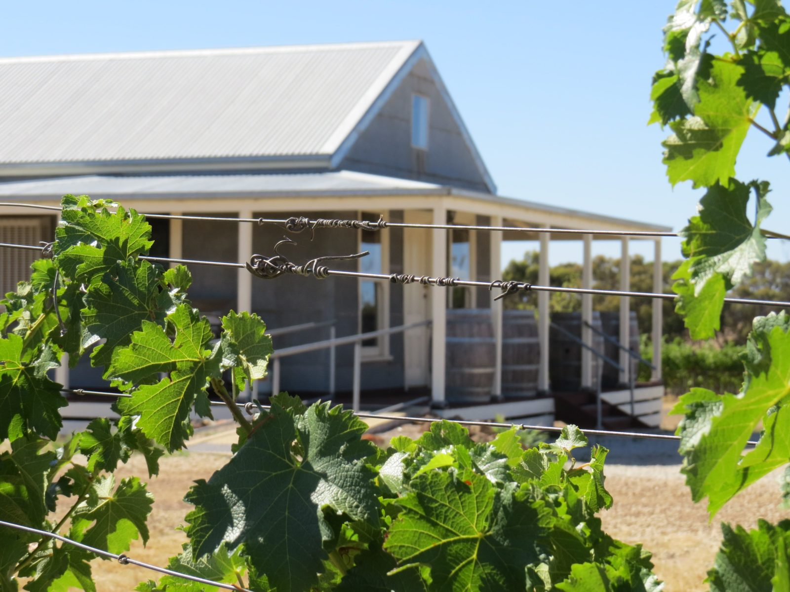 Norton Estate Wines