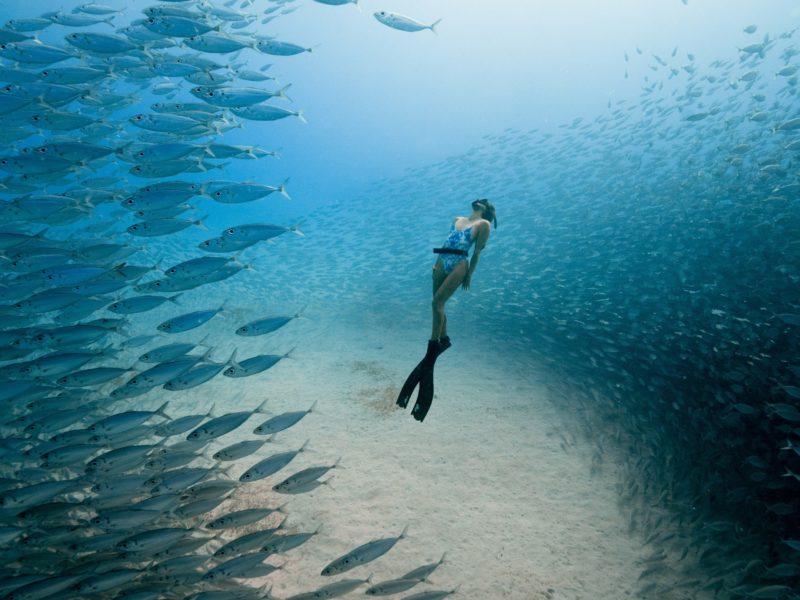 Ocean Film Festival World Tour