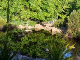 pool reflecting rich green tree landscape