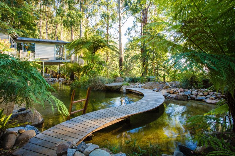 "alt=""curved walkway, billabong, ferns and tall gum trees"""