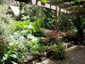 "alt=""exotic plants under a pergola at Tugurium"