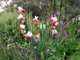 Birchwood open garden