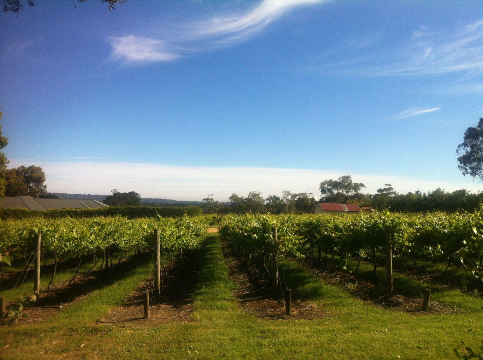 Front vineyard