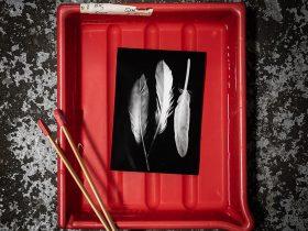 Photogram of feathers