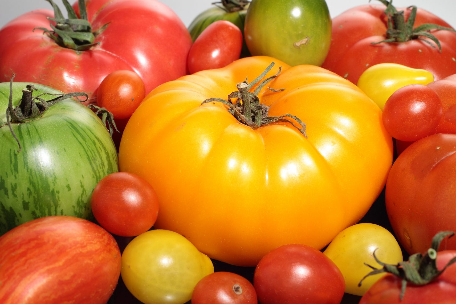 Tomatoes - pick your own