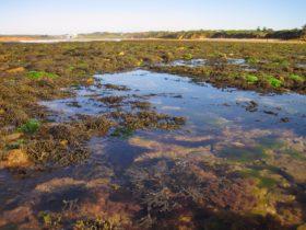 Point Danger Marine Sanctuary