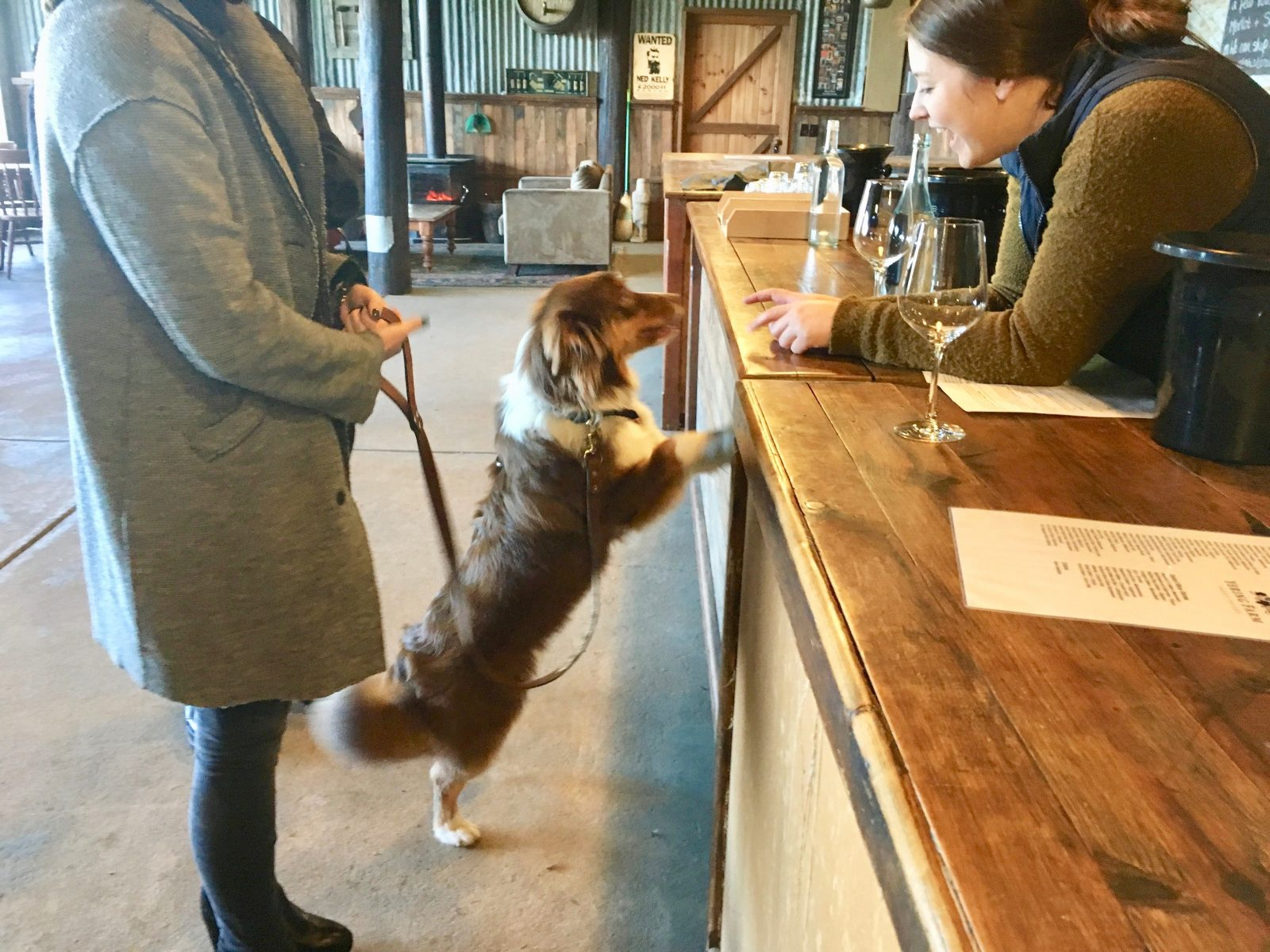 Private Doggy Wine Tour in the Yarra Valley Pooches and Pinot