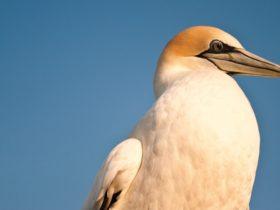 Port Phillip Heads Marine National Park