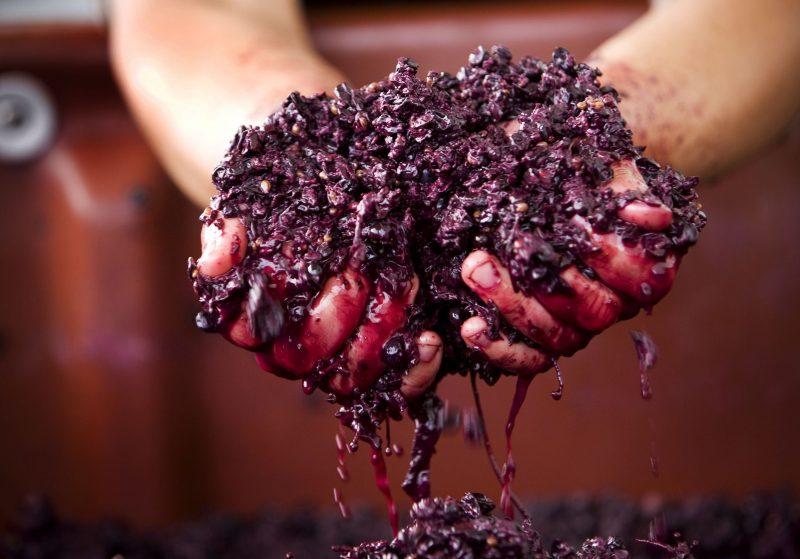 Handmade wines
