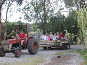 Free family hayrides