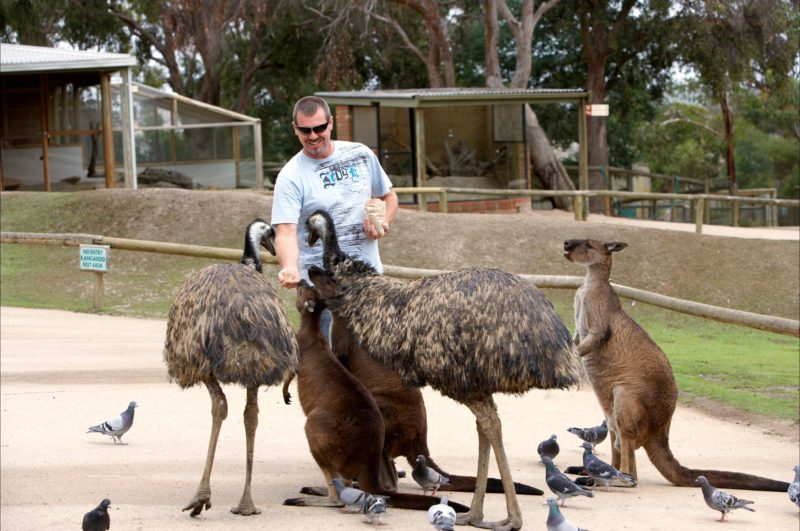 WorldMark Ballarat animals feeding
