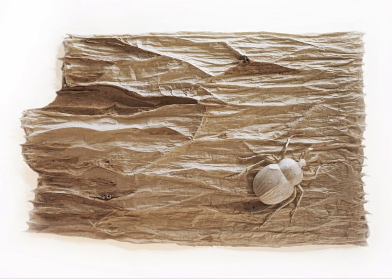 Semi-abstract that looks like a roughly broken piece of bark with a stubby shaped beetle