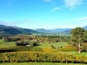 Autumn views over Ringer Reef vineyard