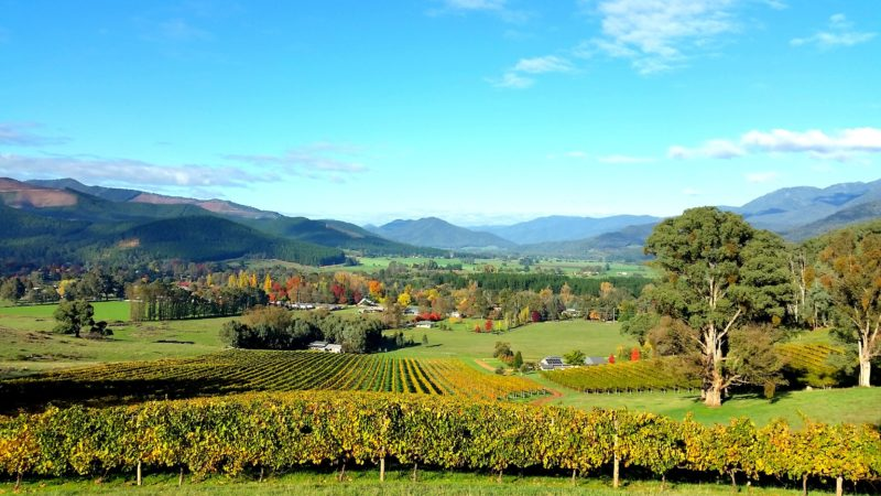 Autumn views over Ringer Reef vineyard