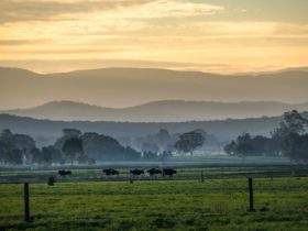 Maffra - Dairy country