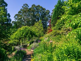 gravel path, plant filled borders and tall gum trees