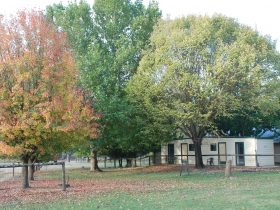 Autumn elm cabins