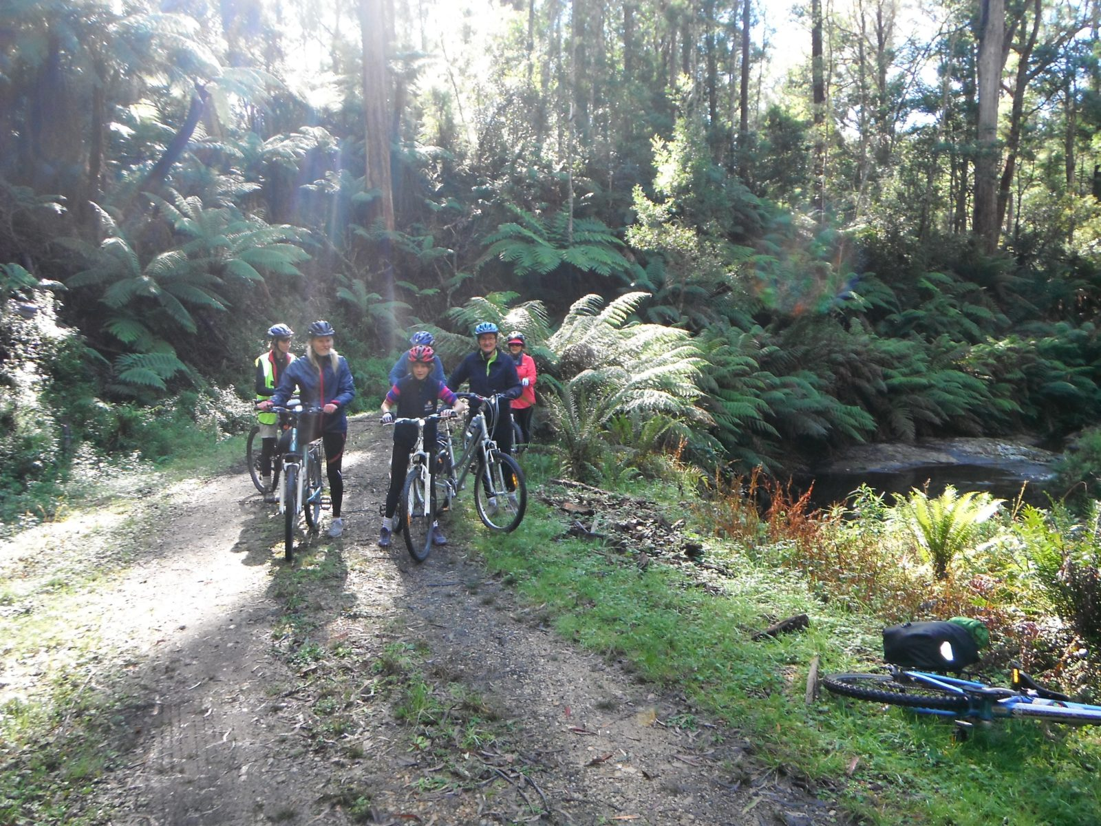 Cycling in rainforest East Gippsland