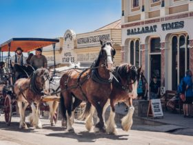 Tour Sovereign Hill via horse-drawn carriage