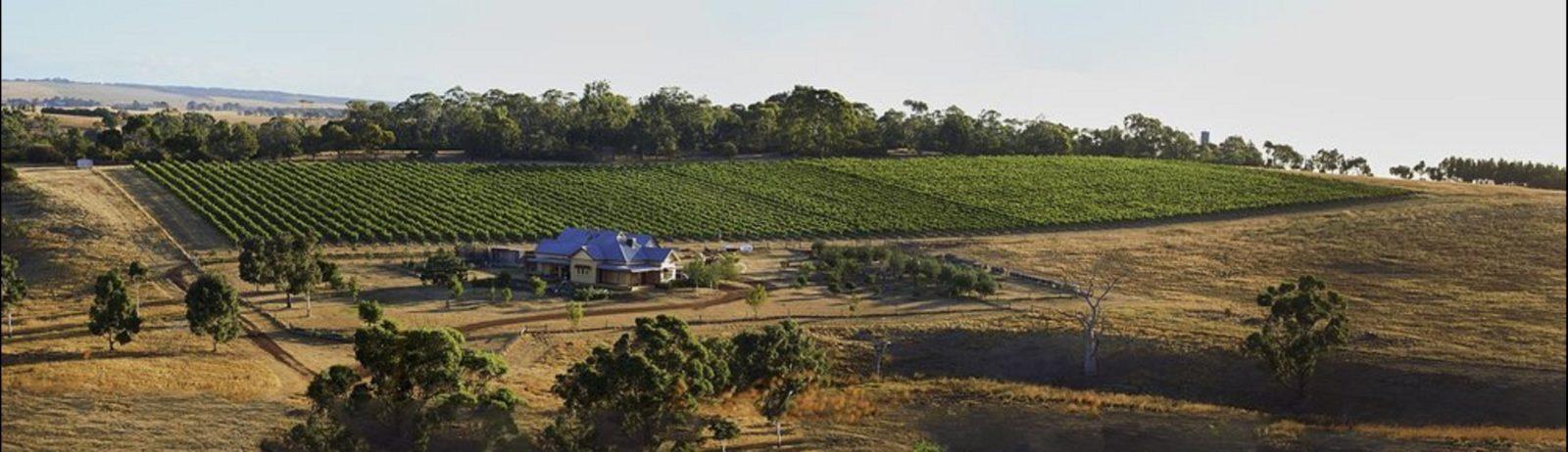 Spence Wines landscape