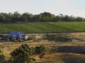 Spence Wines landscape