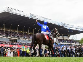 Hugh Bowman celebrates Winx's fourth Cox Plate victory
