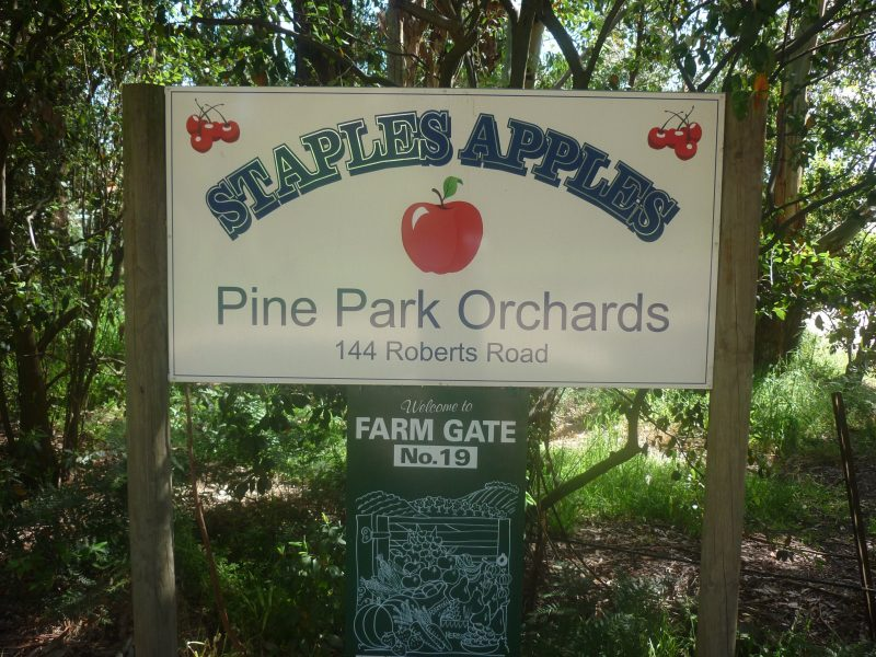 Staples Apples