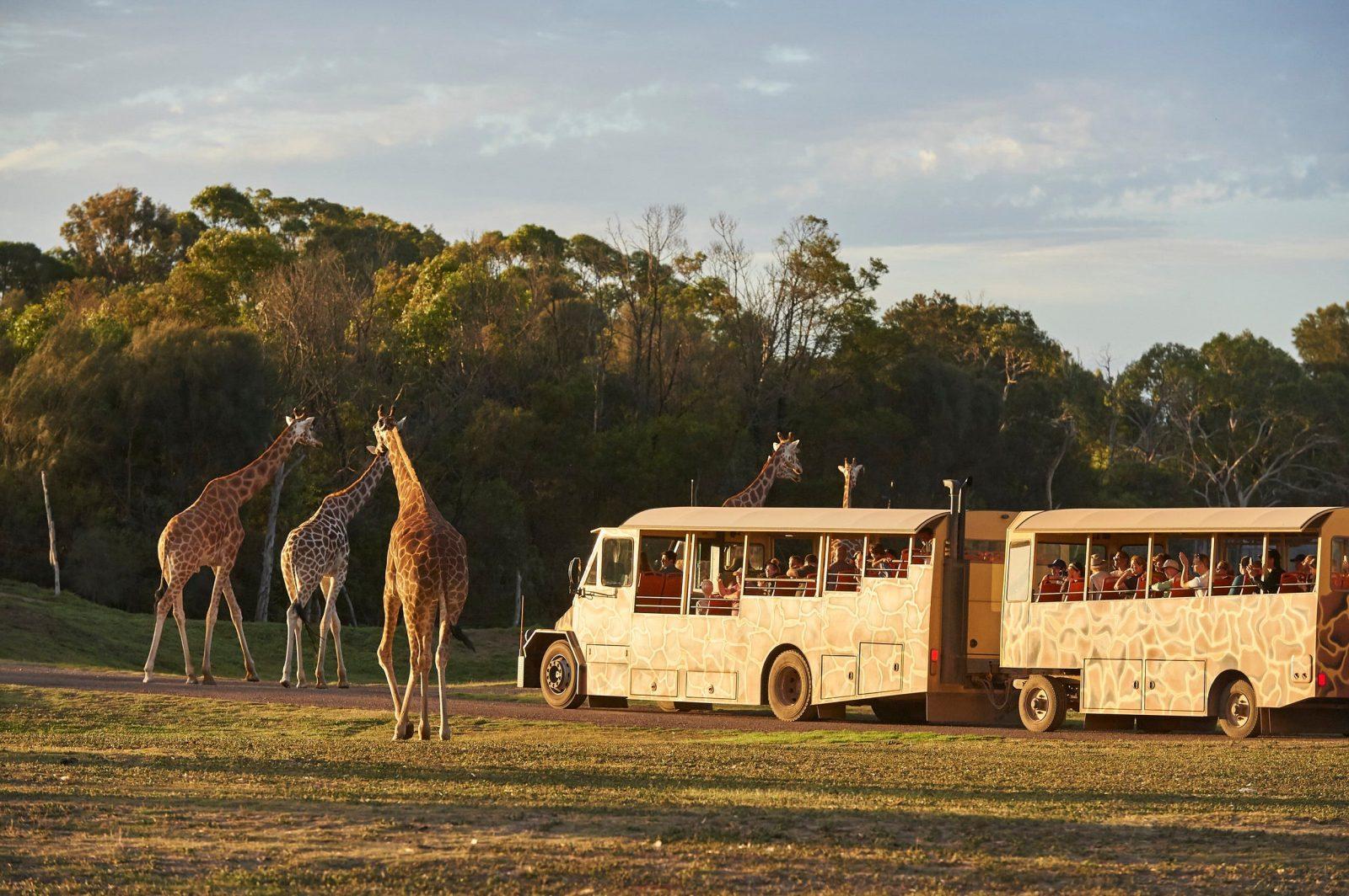 Sunset Safari - Savannah Tour