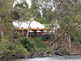 Cafe from the Wetlands