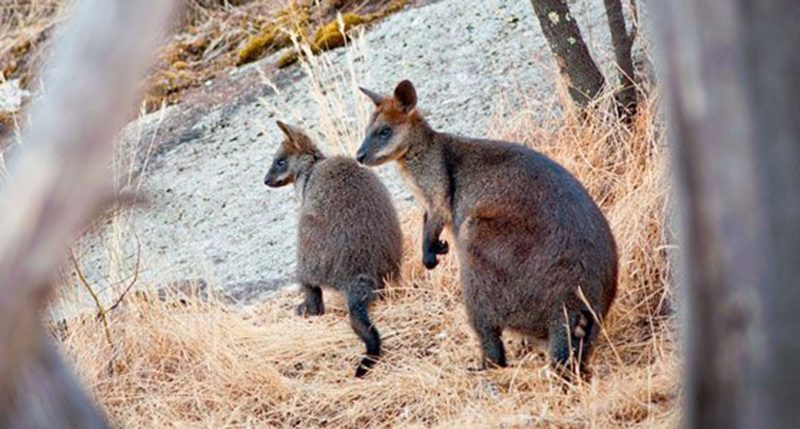 Terrick Terrick National Park
