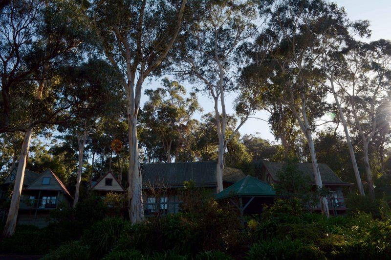 Cottage's Garden