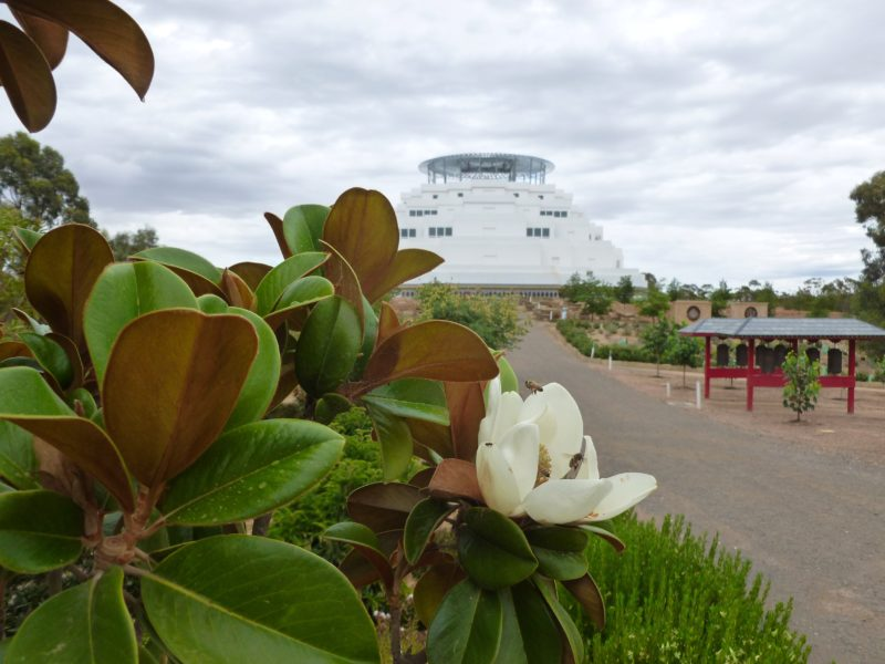 Blooming magnolia in the Great Stupa's Peace Park