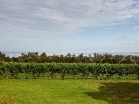 Vines & Blue Sky