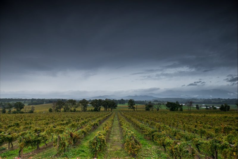 The stunning Yarra Valley. This view taken from Yarra Yering- one of Australia's greatest wineries.