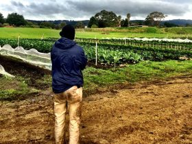 Torello Farm grows a wide variety of vegetables.