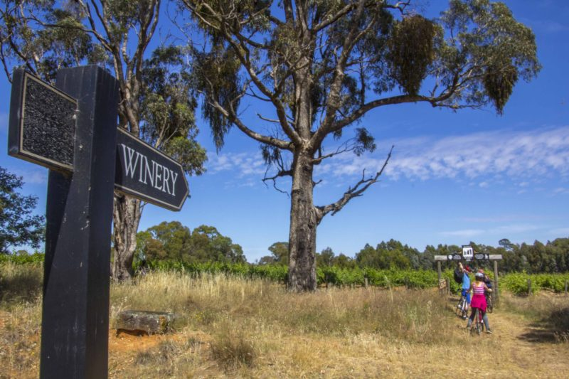 Cycling to a cellar door on the Murray to Mountains Rail trail
