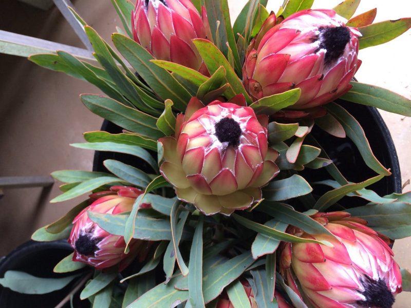 Batlow Blooms
