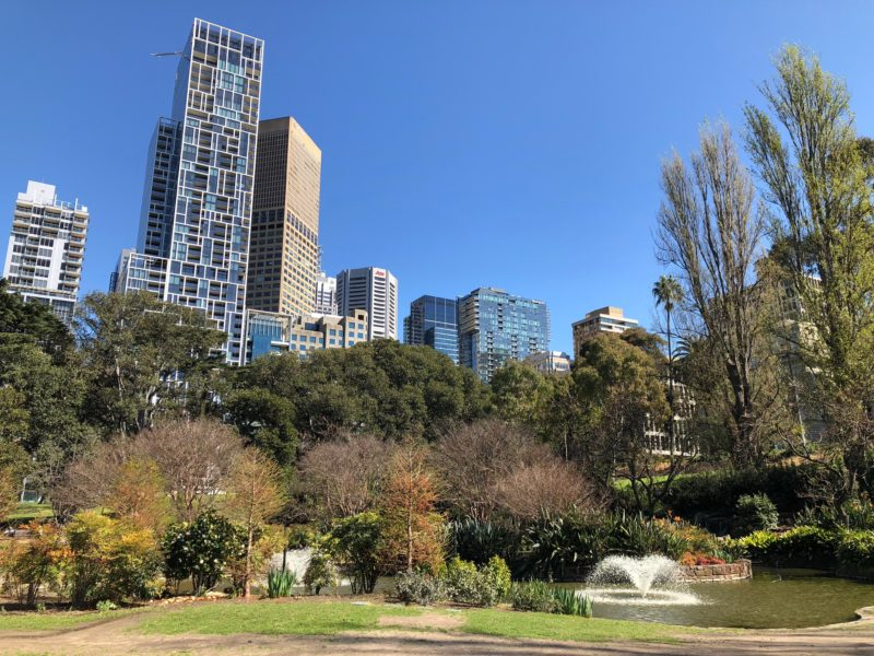 The city pokes out over the trees in Treasury Gardens
