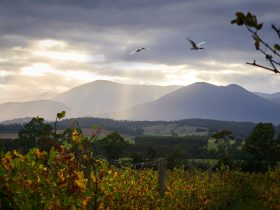 Domaine Chandon Vineyard, Yarra Valley