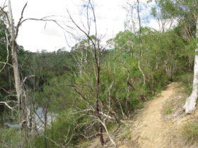 Warrandyte State Park