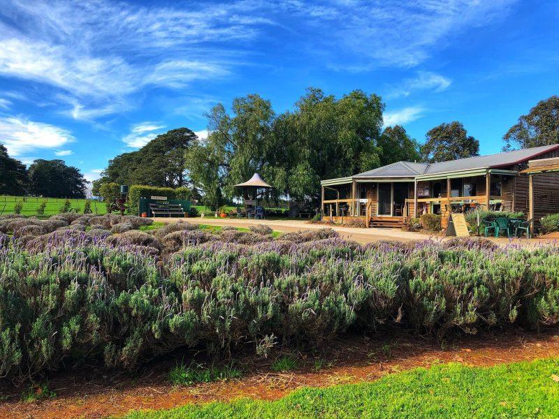 Warratina Lavender Farm an hour's drive from Melbourne