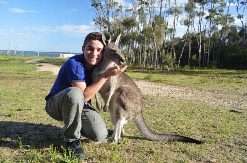 Australian Wildlife - kangaroos