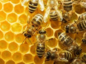Wattle Grove Honey and Beekeeping Supplies