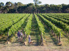 Weathercraft Vineyard