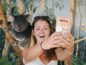 Welcome to Travel: Melbourne - Koala Selfie