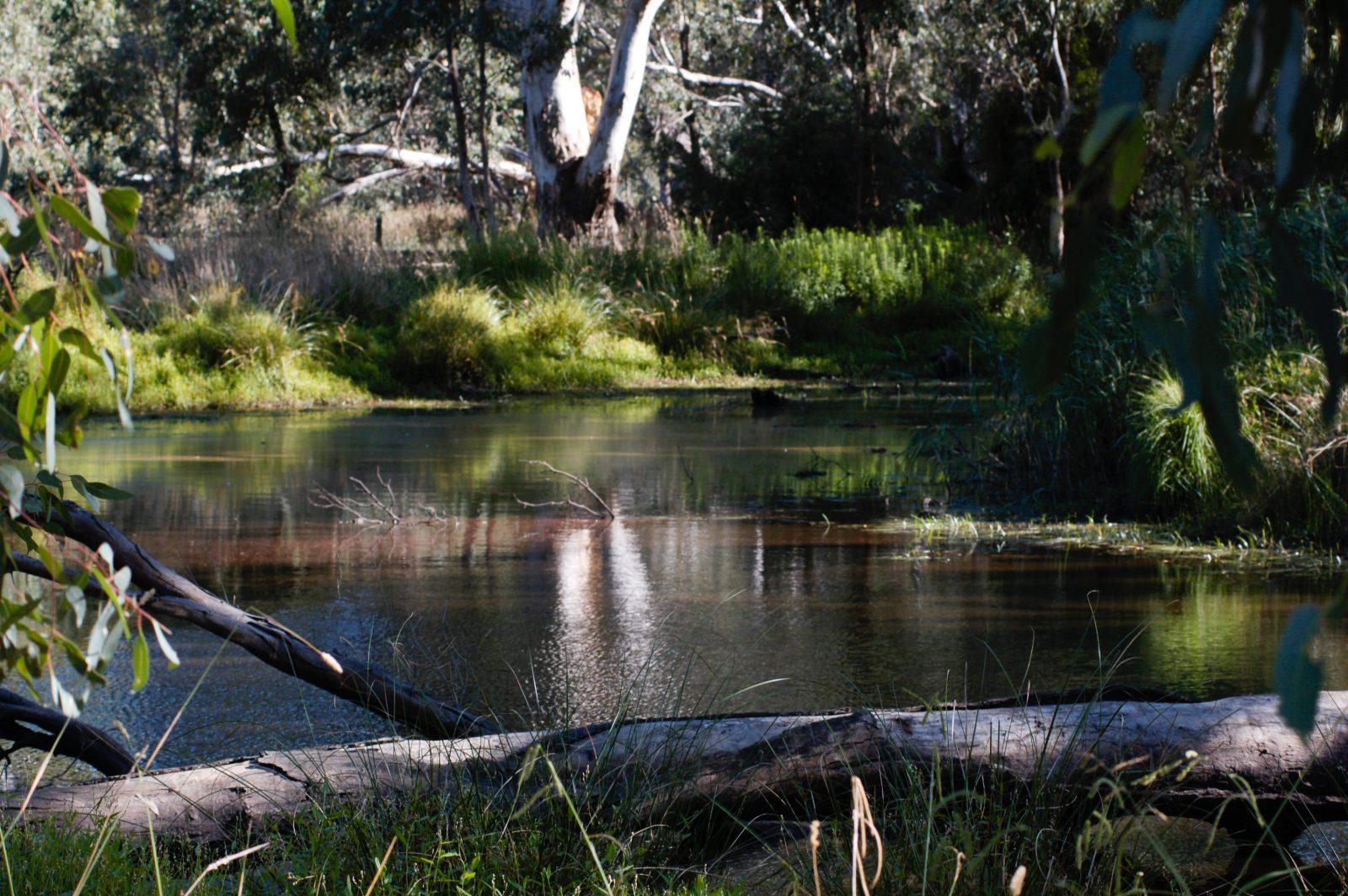 Yea Wetlands