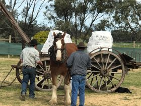 clydesdale Long Paddock Murray River