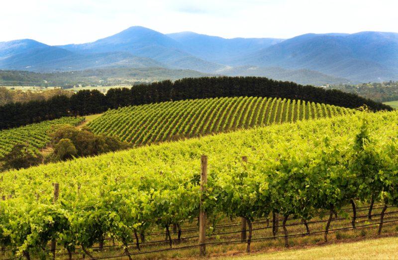 Yarra Valley - Hanrahans Winery