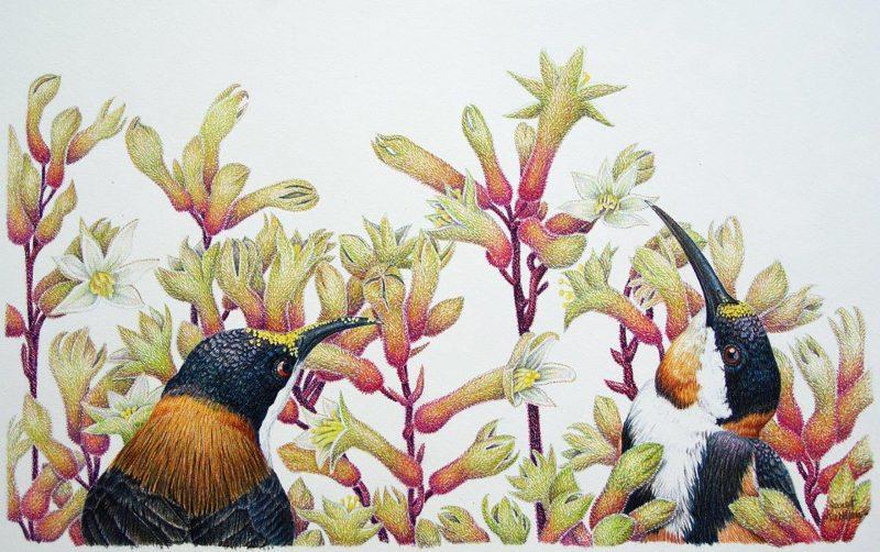 Wildflower Exhibition